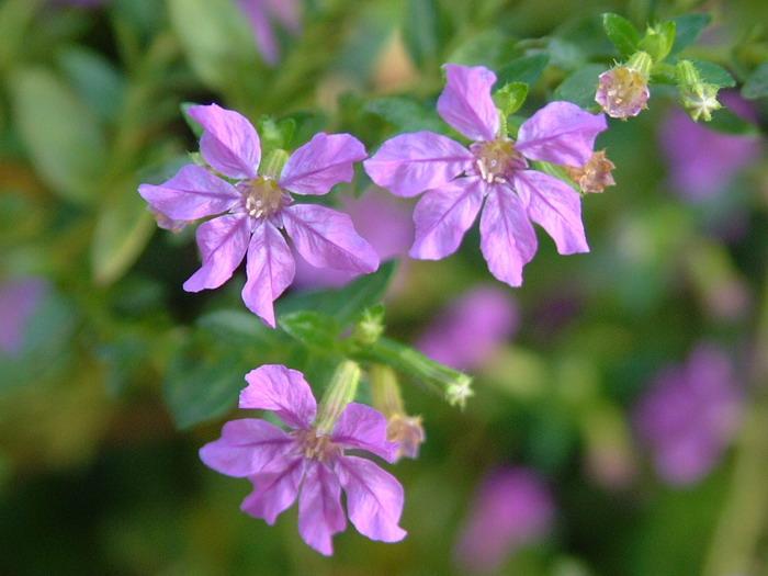 花卉图片及名称大全 花卉图片大全