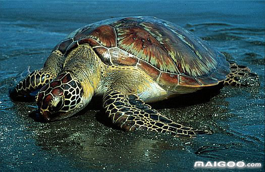 福建厦门珍稀海洋物种国家级自然保护区攻略图片
